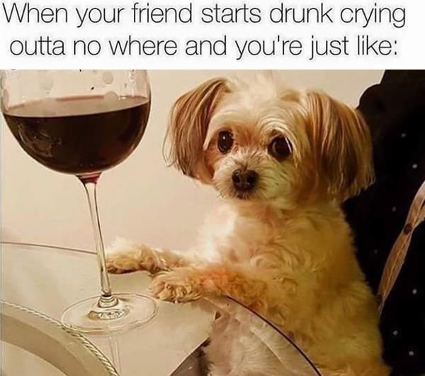 Dog - When your friend starts drunk crying outta no where and you're just like: