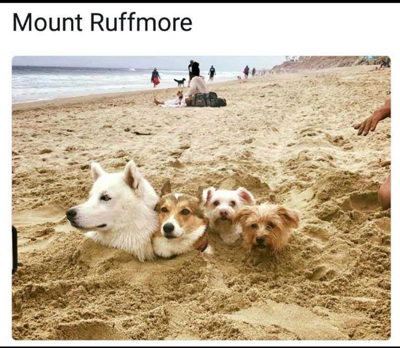 Dog - Mount Ruffmore