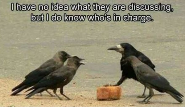 Crow - I have no idea what they are discussing, but I do know who's in charge.