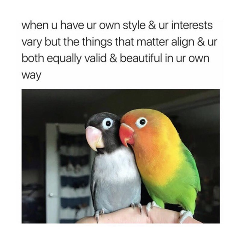 Bird - when u have ur own style & ur interests vary but the things that matter align & ur both equally valid & beautiful in ur own way