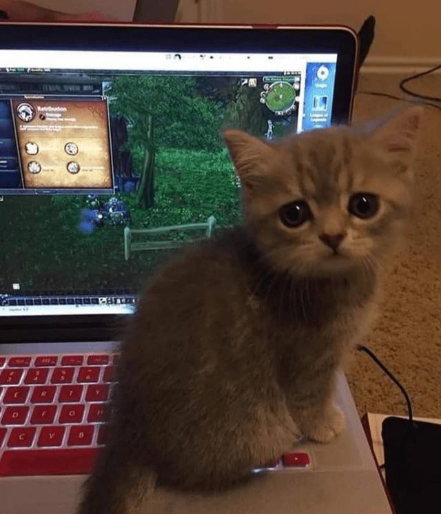 Cat - Retuton C.