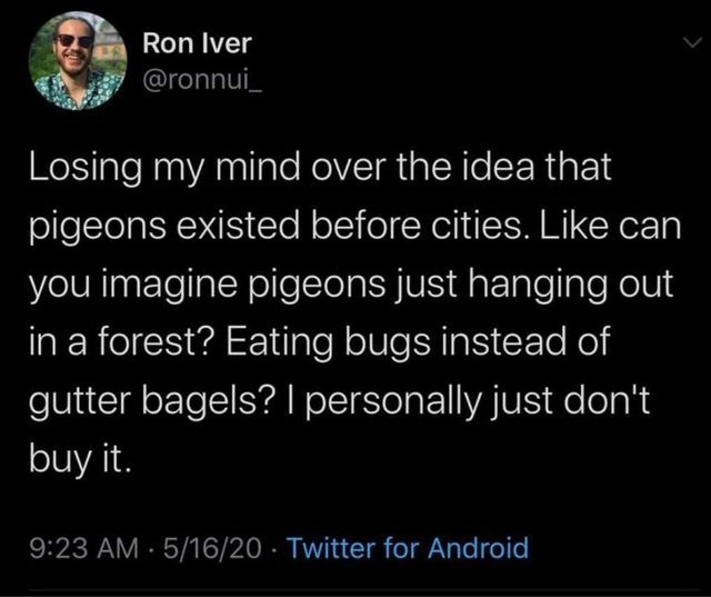 Text - Ron Iver @ronnui_ Losing my mind over the idea that pigeons existed before cities. Like can you imagine pigeons just hanging out in a forest? Eating bugs instead of gutter bagels? I personally just don't buy it. 9:23 AM 5/16/20 · Twitter for Android