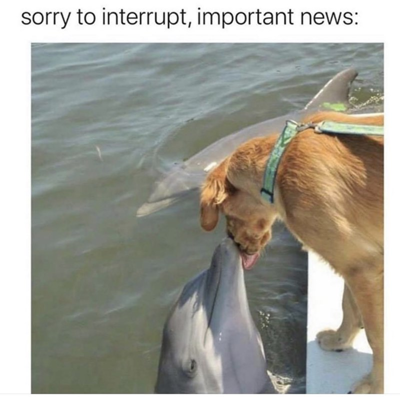 "Funny and cute meme that reads, ""Sorry to interrupt, important news"" above a photo of a dog licking a dolphin"