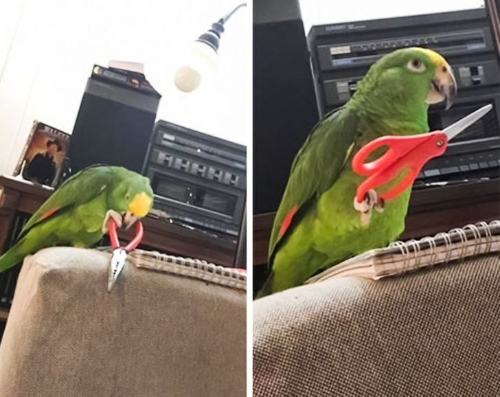 Bird - HHHHH