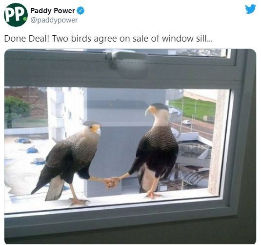 Bird - PP. Paddy Power @paddypower Done Deal! Two birds agree on sale of window sill.