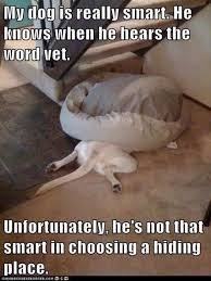 Photo caption - My dog is really smart. He knows when he hears the word vet. Unfortunately, he's not that smart in choosing a hiding place.