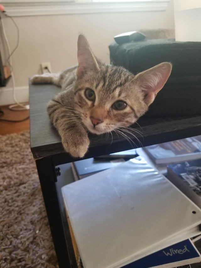 Cat - Wired