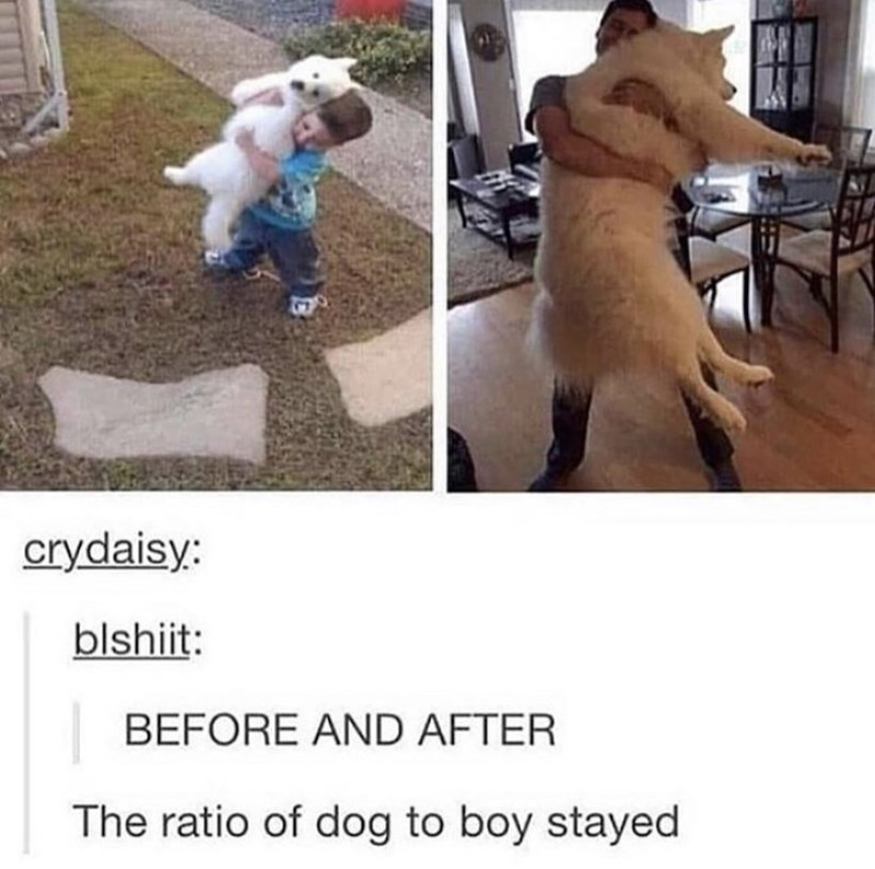 Canidae - 13 crydaisy: blshiit: BEFORE AND AFTER The ratio of dog to boy stayed