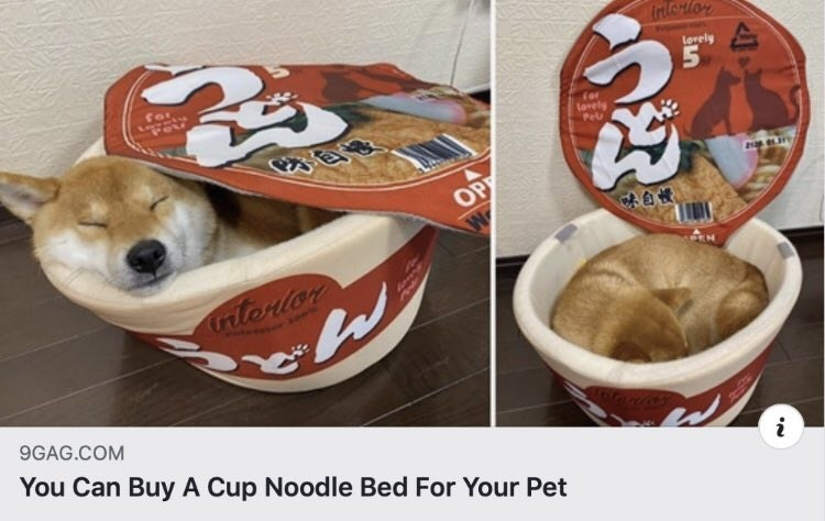 Canidae - Interlor Lorely Pel Tor Lorely OP 自慢 trtorlor 9GAG.COM You Can Buy A Cup Noodle Bed For Your Pet