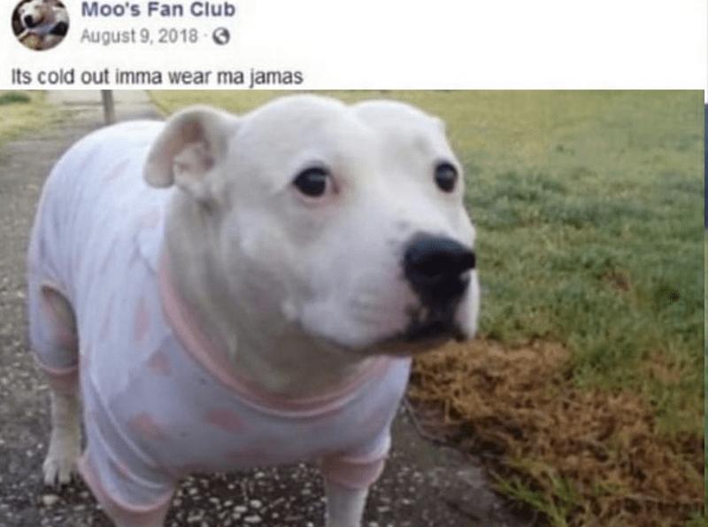 Dog - Moo's Fan Club August 9, 2018 O Its cold out imma wear ma jamas