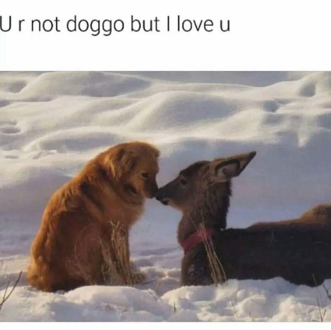 Adaptation - Ur not doggo but I love u