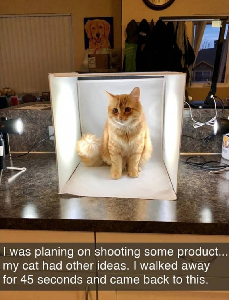 Cat - I was planing on shooting some product... my cat had other ideas. I walked away for 45 seconds and came back to this.