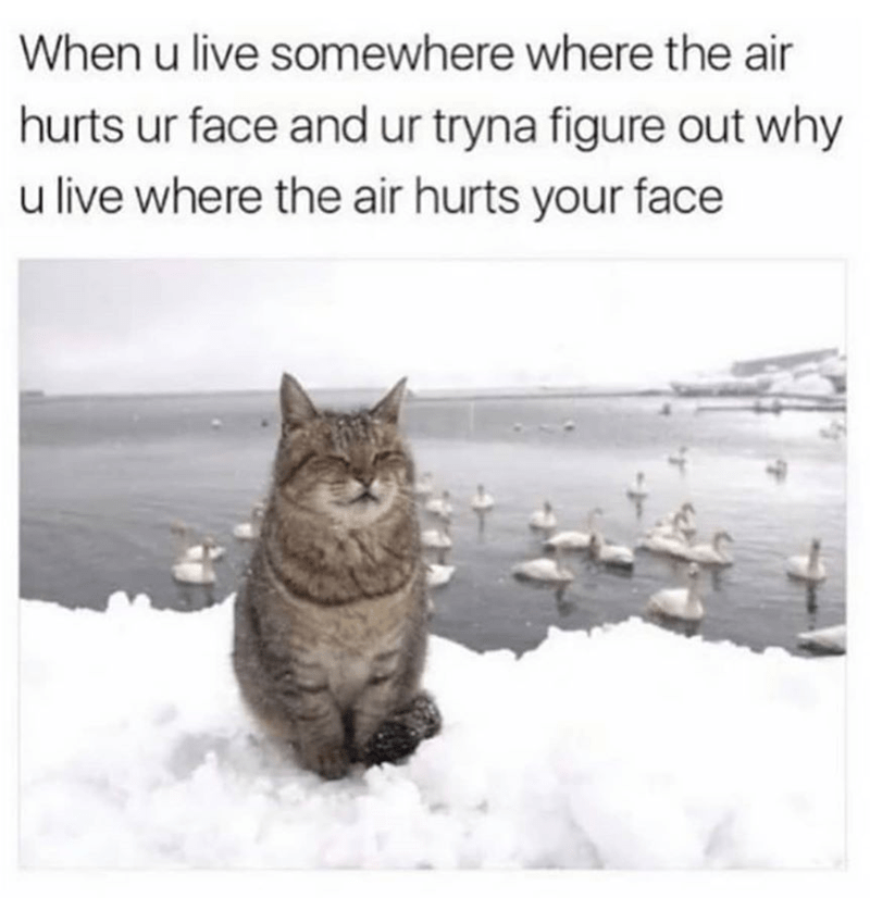 Cat - Cat - When u live somewhere where the air hurts ur face and ur tryna figure out why u live where the air hurts your face