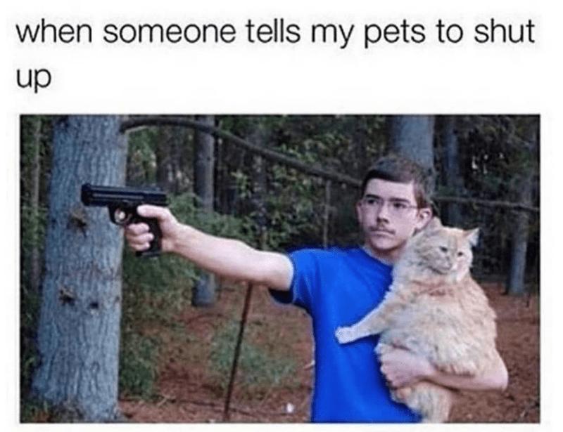 Cat - Photo caption - when someone tells my pets to shut dn