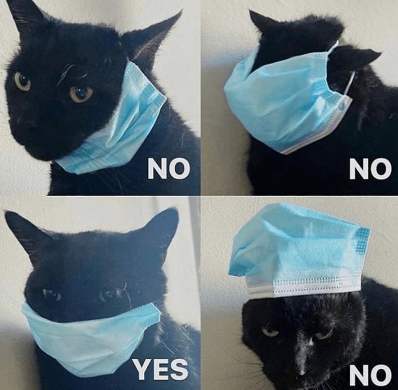 Cat - Black cat - NO NO YES NO