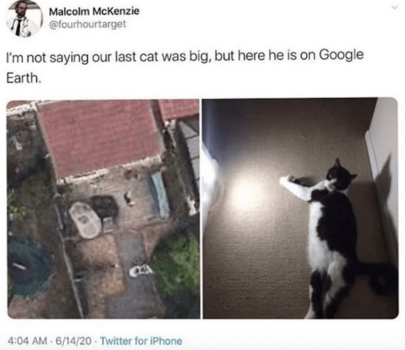Cat - Malcolm McKenzie @fourhourtarget I'm not saying our last cat was big, but here he is on Google Earth. 4:04 AM 6/14/20 Twitter for iPhone