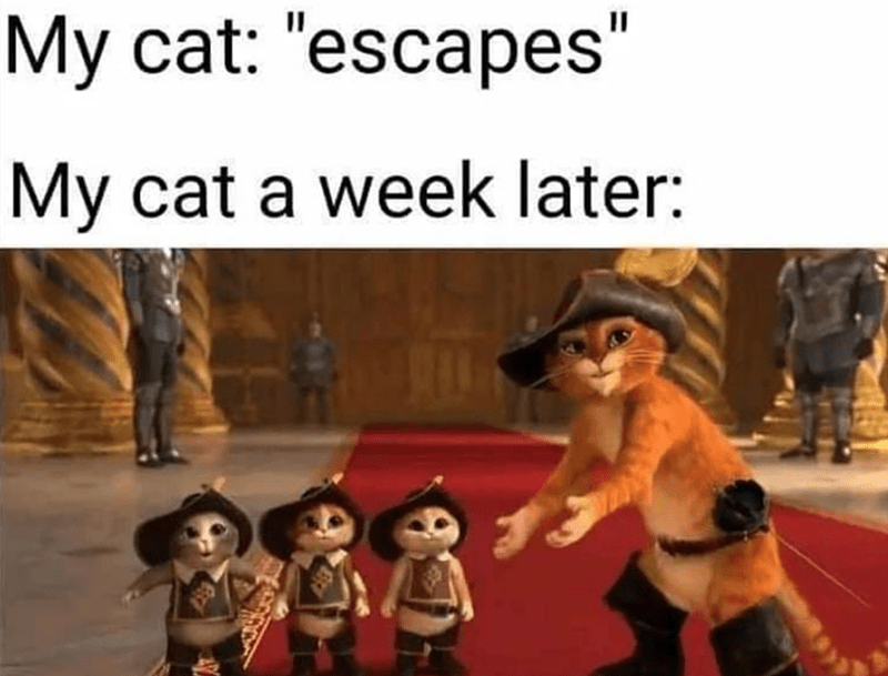 """People - My cat: """"escapes"""" My cat a week later:"""
