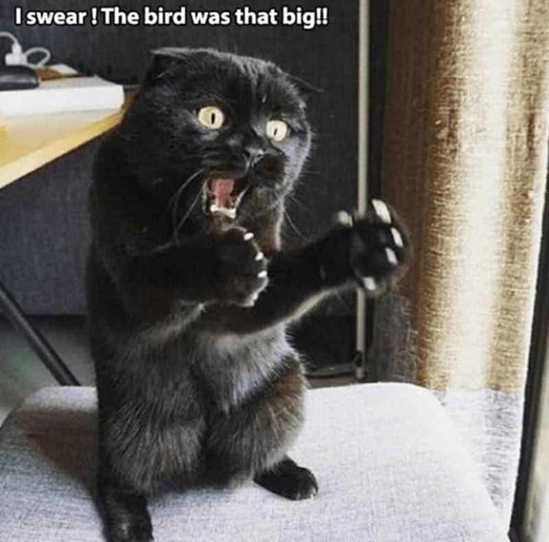 Cat - Cat - I swear! The bird was that big!!