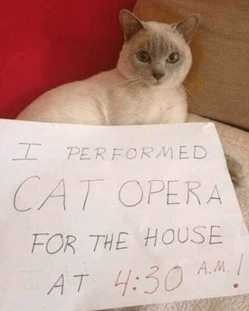 Cat - I PERFORMED CAT OPERA FOR THE HOUSE AT 4:30 A.M./