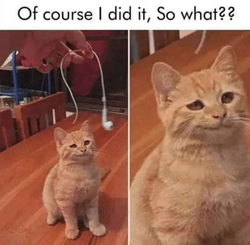 Cat - Cat - Of course I did it, So what??