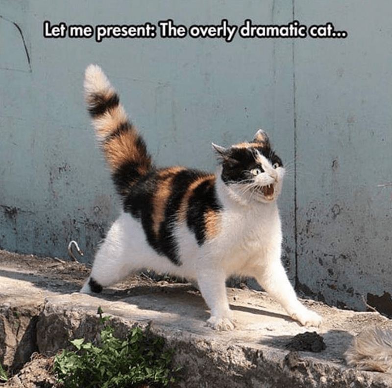 Cat - Cat - Let me present: The overly dramatic caf.