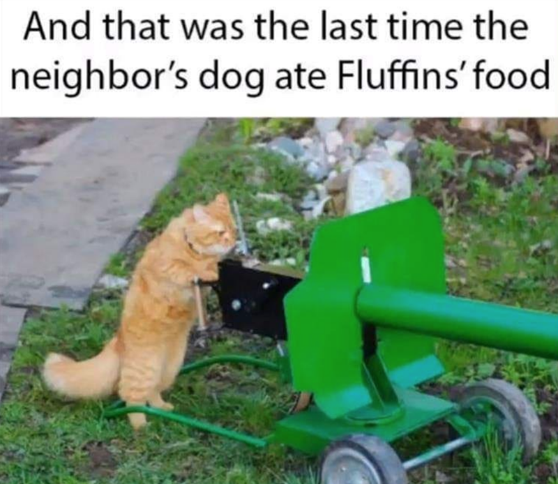 Cat - Lawn - And that was the last time the neighbor's dog ate Fluffins' food