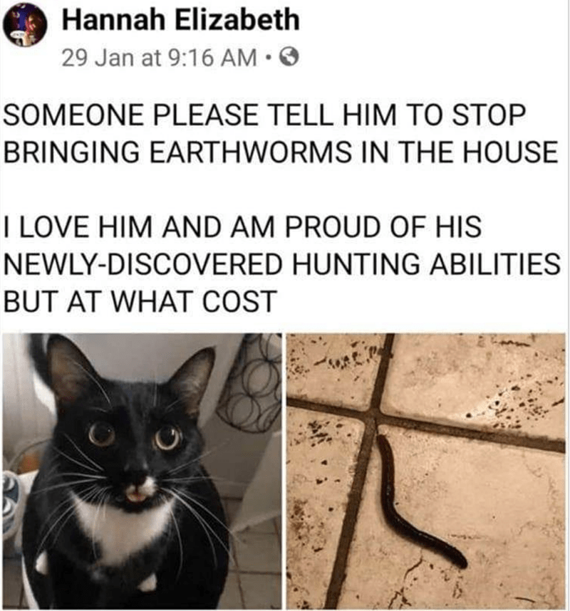 Cat - O Hannah Elizabeth 29 Jan at 9:16 AM •O SOMEONE PLEASE TELL HIM TO STOP BRINGING EARTHWORMS IN THE HOUSE I LOVE HIM AND AM PROUD OF HIS NEWLY-DISCOVERED HUNTING ABILITIES BUT AT WHAT COST