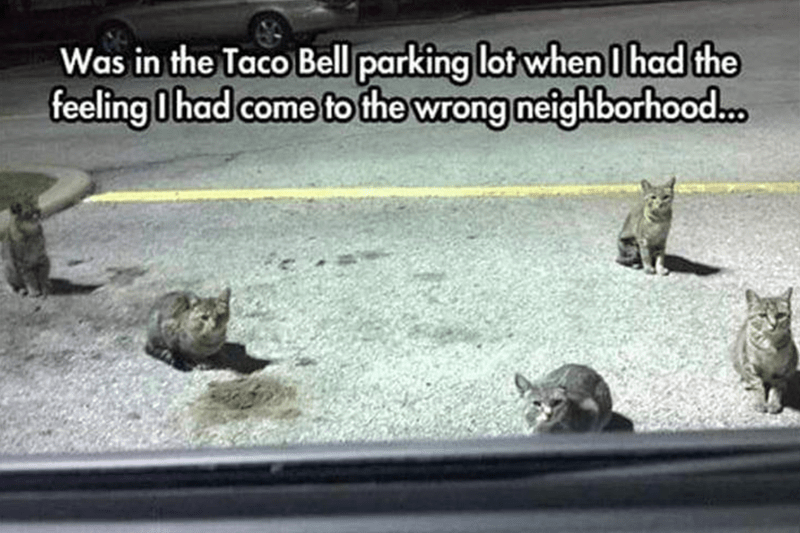 Turtle - Was in the Taco Bell parking lot when I had the feeling I had come to the wrong neighborhood.