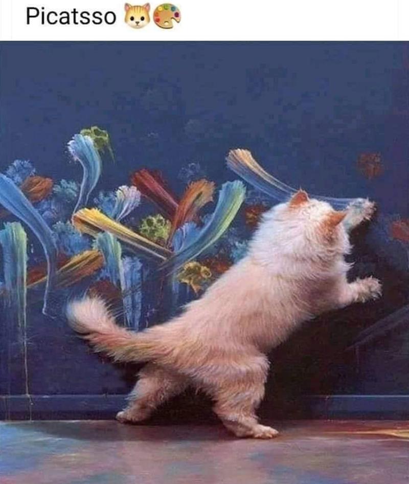 Cat - Cat - Picatsso