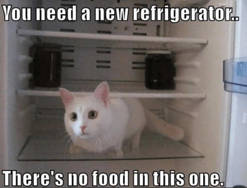 Cat - You need a new refrigerator. There's no food in this one.