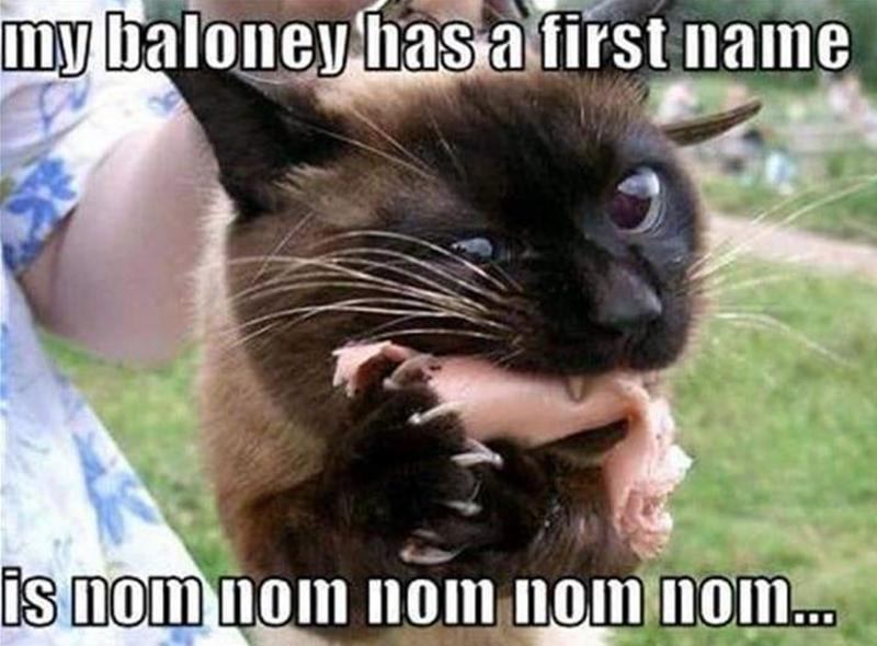 Cat - Cat - my baloney hasa first name is nom nom nom nom nom.