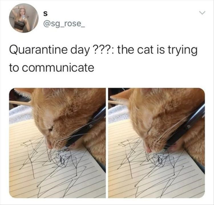 tweet by @sg_rose_ Quarantine day ???: the cat is trying to communicate cat holding a pen in its mouth and scribbling on a notepad