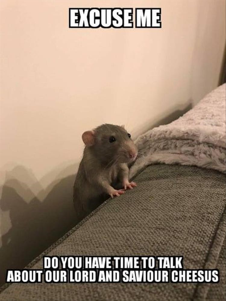 EXCUSE ME DO YOU HAVE TIME TO TALK ABOUT OUR LORD AND SAVIOUR CHEESUS funny rat peeking over side of bed