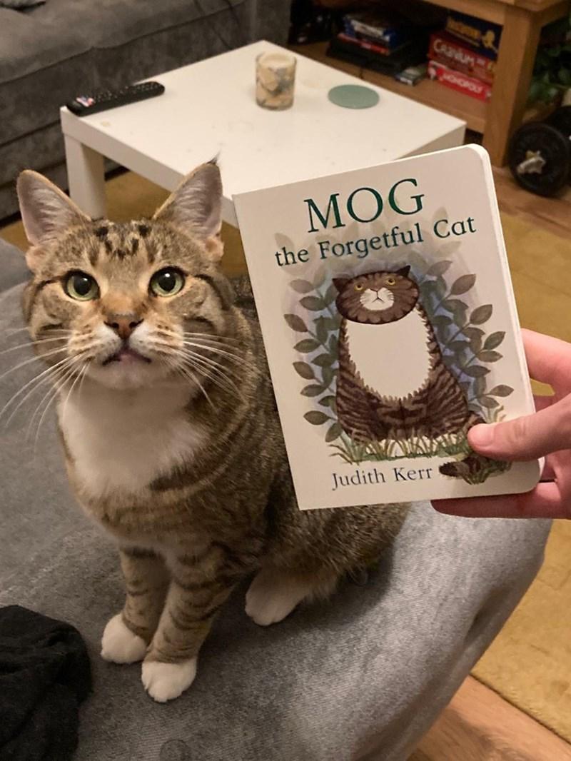 Cat - Cat - CAaUM CHOPOLY МOG the Forgetful Cat Judith Kerr
