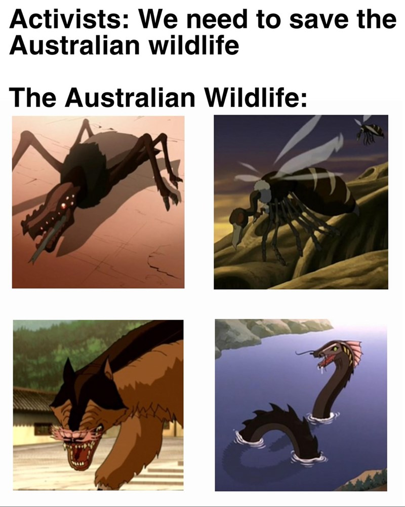 Organism - Activists: We need to save the Australian wildlife The Australian Wildlife: