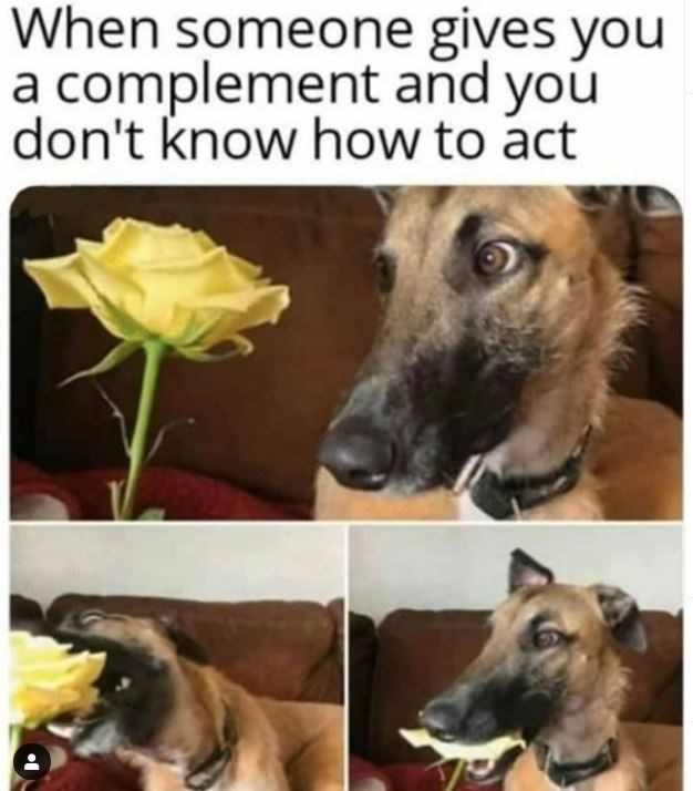 Dog - When someone gives you a complement and you don't know how to act