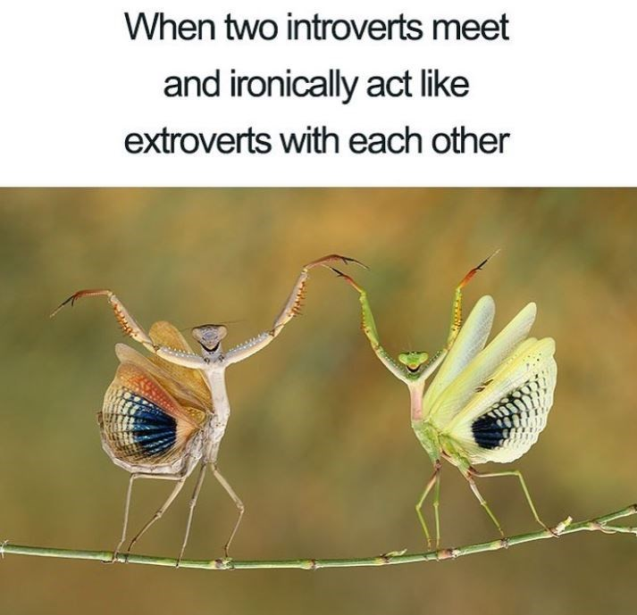Adaptation - When two introverts meet and ironically act like extroverts with each other