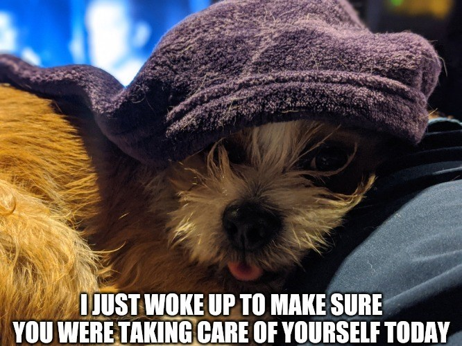Dog - I JUST WOKE UP TO MAKE SURE YOU WERE TAKING CARE OF YOURSELF TODAY