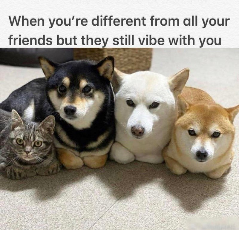 Mammal - When you're different from all your friends but they still vibe with you