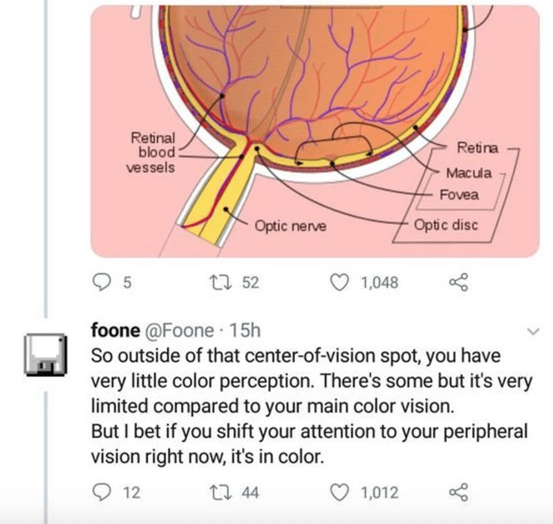Text - Retinal blood: vessels Retina Macula Fovea Optic nerve Optic disc 27 52 1,048 foone @Foone 15h So outside of that center-of-vision spot, you have very little color perception. There's some but it's very limited compared to your main color vision. But I bet if you shift your attention to your peripheral vision right now, it's in color. 12 17 44 1,012
