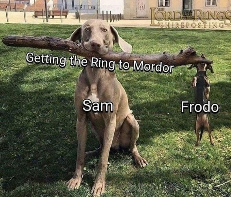 Dog - ORDERINGS SHIREPOSTING Getting the Ring to Mordor Sam Frodo