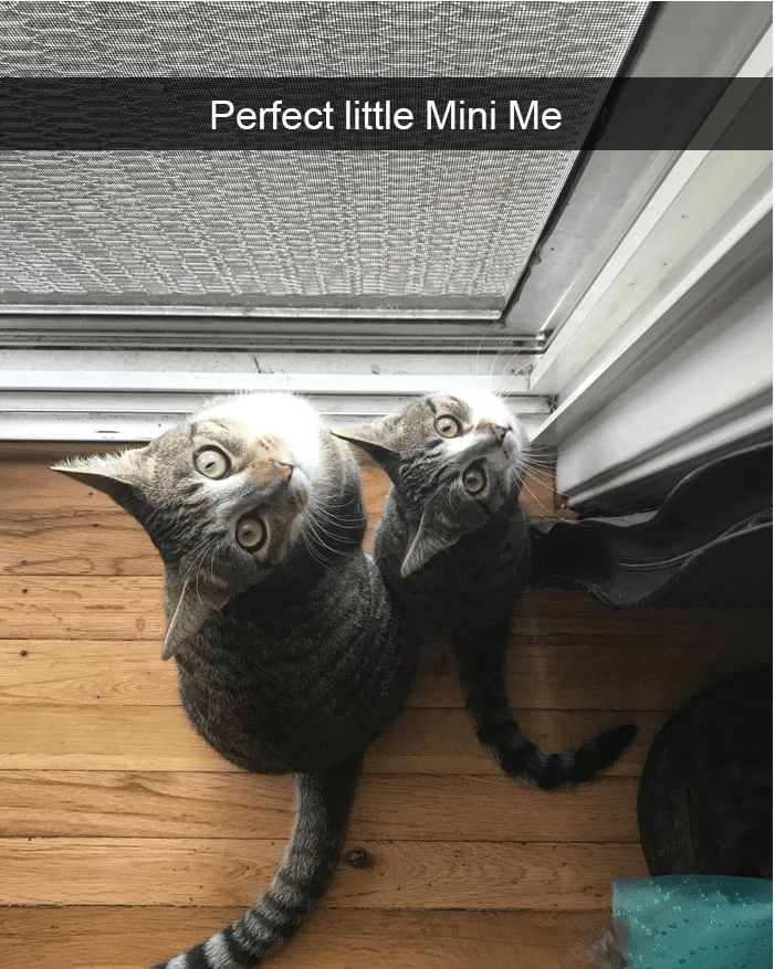 Cat - Cat - Perfect little Mini Me