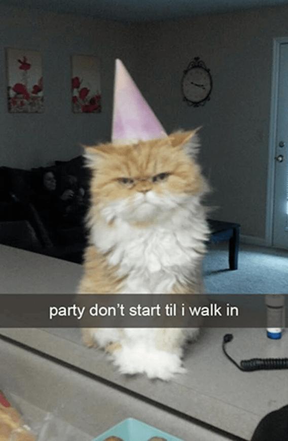 Cat - Cat - party don't start til i walk in