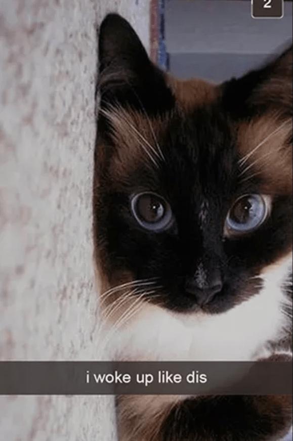 Cat - Cat - i woke up like dis