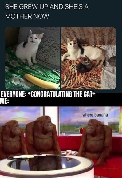Cat - SHE GREW UP AND SHE'S A MOTHER NOW EVERYONE: *CONGRATULATING THE CAT* ME: where banana wwwwsut