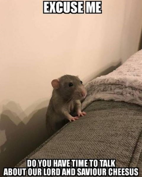 Rat - EXCUSE ME DO YOU HAVE TIME TO TALK ABOUT OUR LORD AND SAVIOUR CHEESUS
