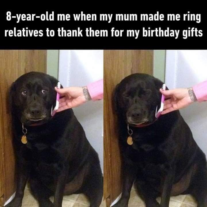 Dog - 8-year-old me when my mum made me ring relatives to thank them for my birthday gifts