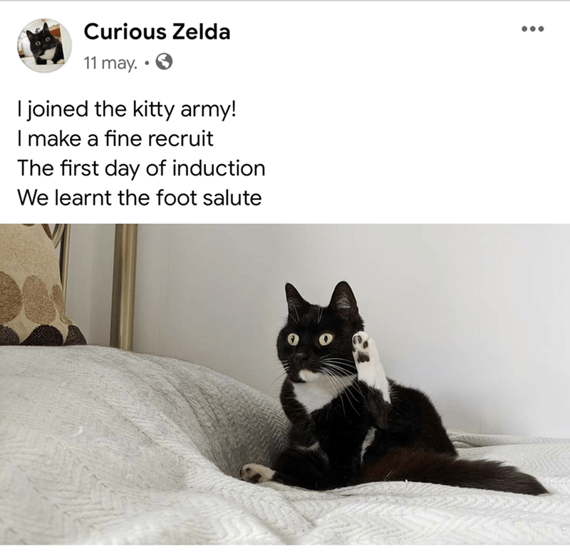 Cat - Curious Zelda 11 may. I joined the kitty army! I make a fine recruit The first day of induction We learnt the foot salute