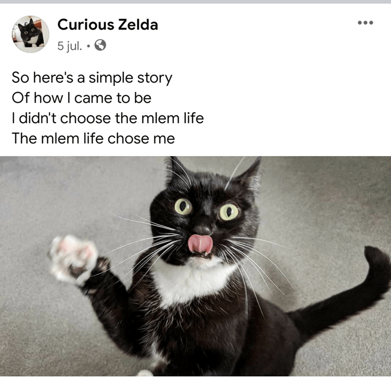 Cat - Curious Zelda 5 jul. • O So here's a simple story Of how I came to be I didn't choose the mlem life The mlem life chose me