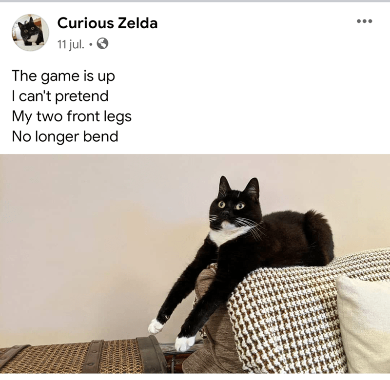 Cat - Curious Zelda 11 jul. • O The game is up I can't pretend My two front legs No longer bend